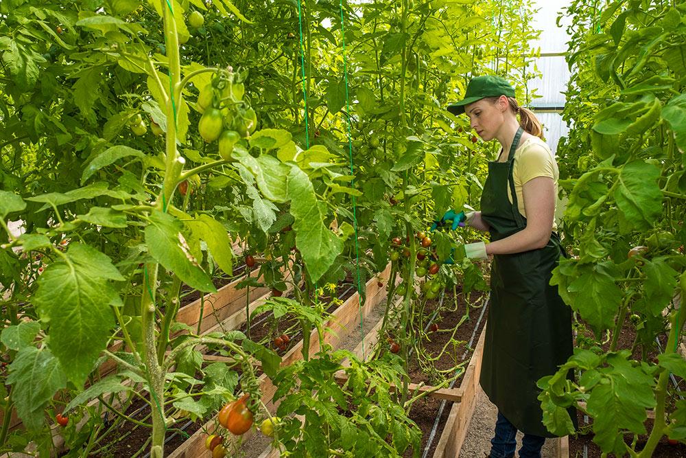 Divise per garden e vivai, uniformità e particolarità per la tua azienda